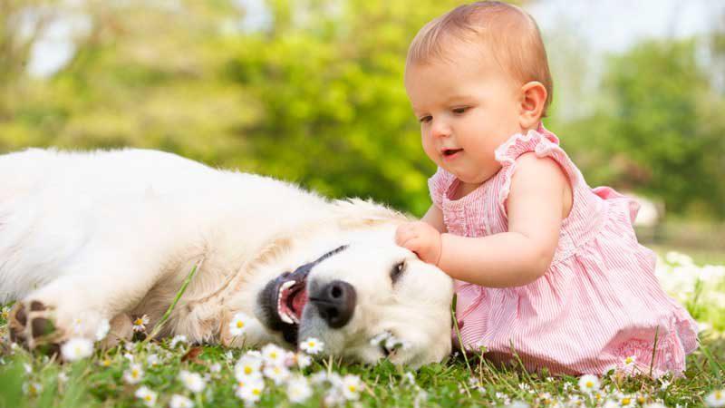 Питомец для ребенка. Почему нужно завести домашнее животное?